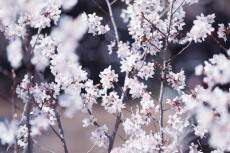 flower945-2