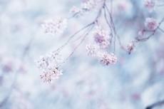 flower946-2