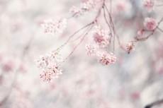 flower946