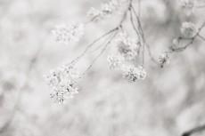 flower946-3