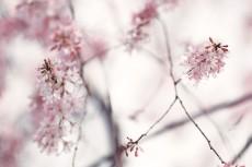 flower947