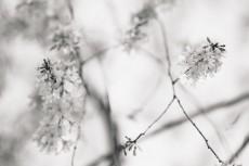 flower947-3