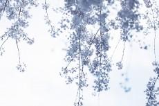 flower949