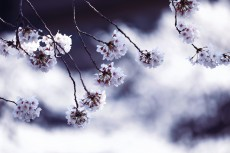 flower953-2