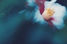 flower954-2