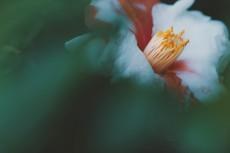 flower954