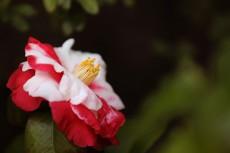 flower955-2