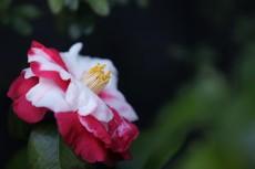 flower955