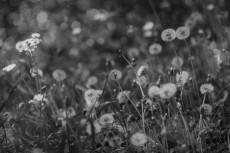 flower1002-3