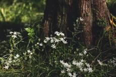 flower1005-2