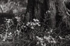 flower1005-3