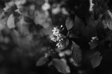 flower1007-3