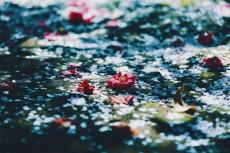 flower956