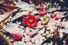 flower957-2