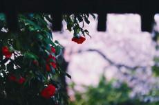 flower958