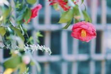 flower959