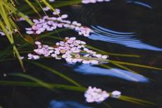 flower962-2