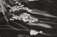 flower962-3
