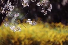 flower963-2