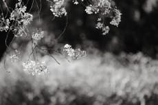 flower963-3