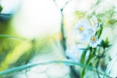 flower964-2