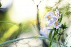 flower964
