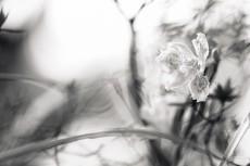 flower964-3