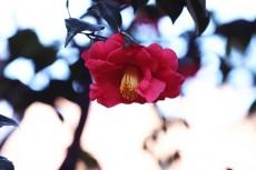 flower966-2