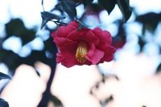 flower966