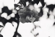 flower966-3