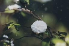 flower967-2