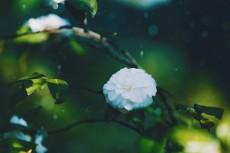 flower967