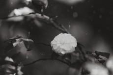 flower967-3