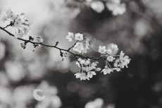 flower968-3