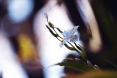 flower969-2