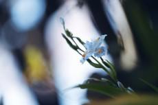 flower969