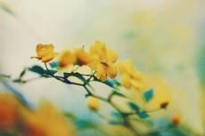 flower970-2