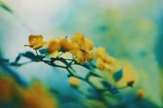 flower970