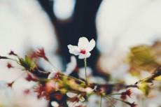 flower971-2