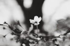 flower971-3