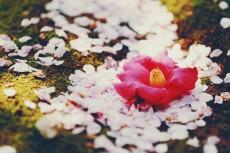 flower973-2