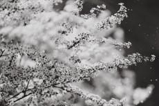 flower974-3