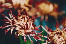flower975