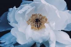 flower976-2