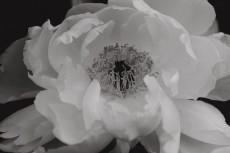 flower976-3