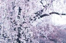 flower977-2