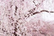 flower977
