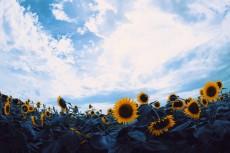 flower978-2