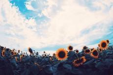 flower978