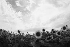 flower978-3